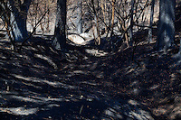 A section of forest destroyed by intense burning after the Mountain Center fire. July 23, 2013.