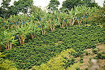 Columbia Coffee Farm<br /> Bird Friendly<br /> Rainforest Alliance Certified