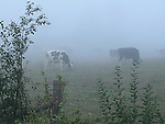 Morning mist over rural landscape