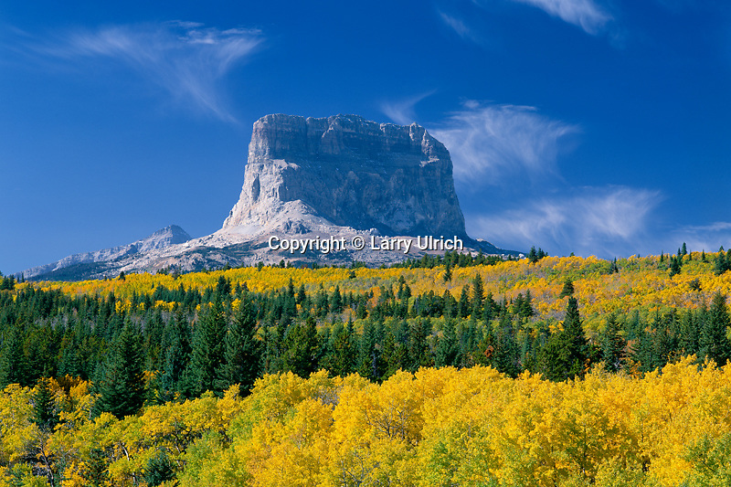 Aspens and Chief Mountain<br />