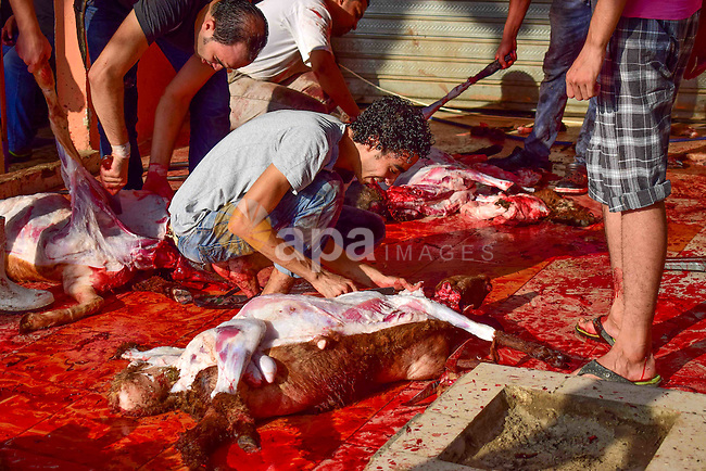 Egyptian Muslims sacrifice animals on the first day of of Eid al-Adha or the feast of sacrifice, in Cairo, Egypt, on September 12, 2016. Muslims across the world are celebrating the annual festival of Eid al-Adha, or the Festival of Sacrifice, which marks the end of the Hajj pilgrimage to Mecca and in commemoration of Prophet Abraham's readiness to sacrifice his son to show obedience to God. Photo by Amr Sayed