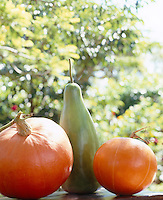 Ornamental pumpkins are used as decoration for an autumn themed garden party