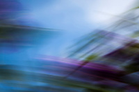 Wind whipped flowers and leaves paint an abstract of flowing  purple and green against a soft blue and cloud-white sky.