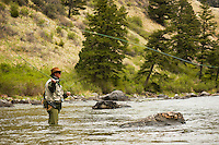 A fly-fisherman casts a line on the Madison River in Bear Trap Canyon.