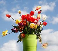 Tulpenmix in een emmer