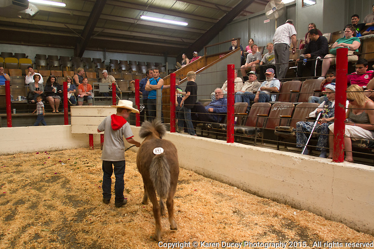 Runaway Ray is paraded in front of potential buyers at the Enumclaw Sale Pavilion in Enumclaw, Wash. on May 9, 2015. (photo © Karen Ducey Photography)