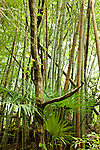 Rural Japan bamboo forest near Narita.