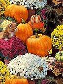 GIORDANO, STILL LIFE STILLLEBEN, NATURALEZA MORTA, paintings+++++,USGI2741V,#I# pumpkins