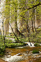 River in the  Plitvince lakes National Park, Croatia, A UNESCO World Heritage Site