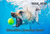 REALISTIC ANIMALS, REALISTISCHE TIERE, ANIMALES REALISTICOS, dogs, paintings+++++SethC_Lumina_320B1734rev2,USLGSC45,#A#, EVERYDAY ,underwater dogs,photos,fotos ,Seth