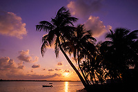 silhouette of coconut palm trees against sunrise over Eleuthera Island, as seen from Spanish Wells, St. George's Cay, Out Islands, Bahamas, Atlantic Ocean
