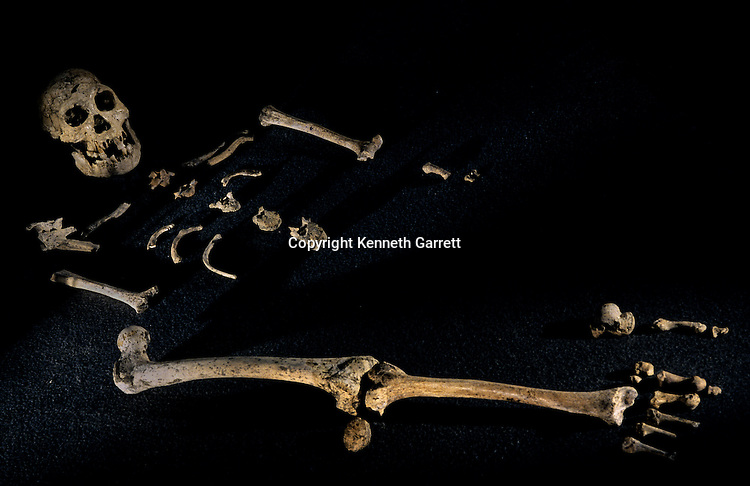 Four foot seven inch tall composite  skeleton from individuals found at Dmanisi, Dmanisi, Georgia Homo erectus site, 1.8 million year old hominins.