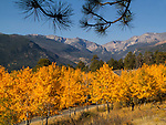 Aspen trees along Moraine Park, Rocky Mountain National Park, Colorado.<br /> Outside Imagery offer private photo tours, year-round.