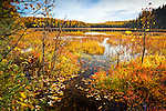 Fall foliage meadow at Nancy Lake. Fall colored hill reflecting on the lake, Nancy Lake State Recreation Area, Southcentral Alaska, Autumn.