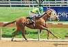 Surge Ahead winning at Delaware Park on 7/22/15