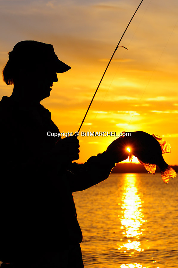 00247-012.03 Black Crappie: Angler is silhouetted against low sun as he displays large crappie.  Spawn, spring, spinning..