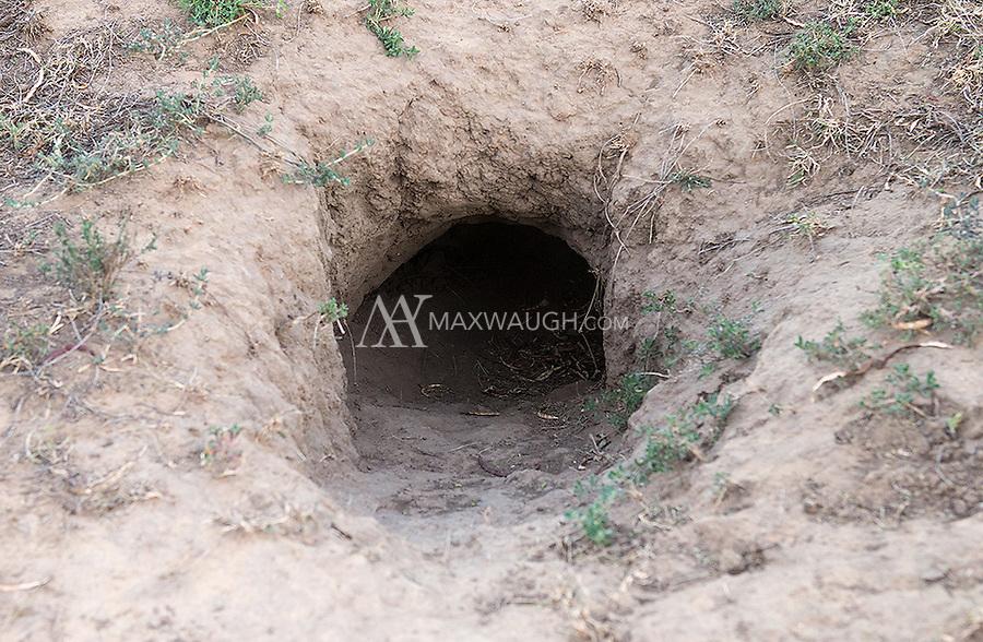 An aardvark hole.