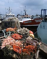 Europe/France/Bretagne/29/Finistère/Le Guilvinec: Plateau de fruits de mer sur le port du Guilvinec - Bigorneaux, coques, amandes, galathées huitres étrilles; tourteaux, araignées, langoustes et langoustines