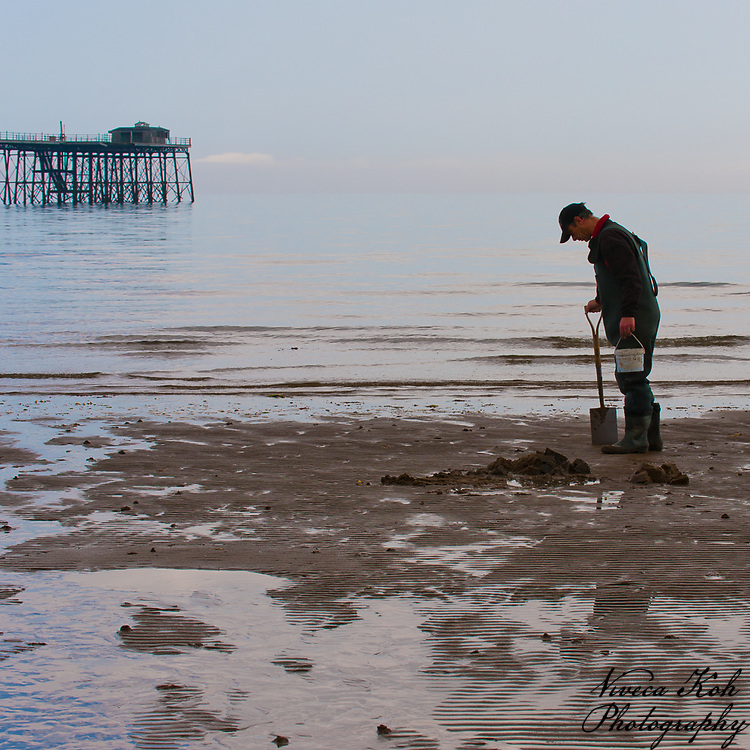 Man digging for lugworm (fishing bait) on the beach, Ramsey, Isle of Man.