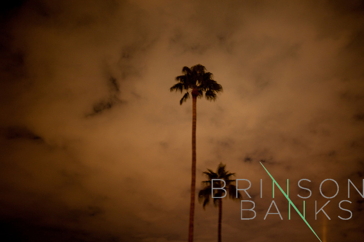 A pair of palm trees in the cool Sun City night.