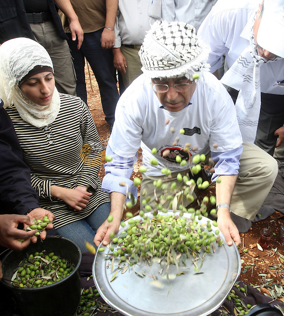 Palestinian Prime Minister Salam Fayyad as he gathering olives with villagers on the first day of the olive harvest  in the West Bank village of Iraq Burin, near Nablus on October 9, 2010. For Palestinians, olives are an important agricultural product and their trees symbolise their attachment to the land. Photo by Mustafa Abu Dayeh / Pool