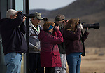 One of the groups photograph Raptors at the Raptor Highway and Byway tour during the Eagles & Agriculture event on Friday, Jan. 26, 2018 in the Carson Valley.