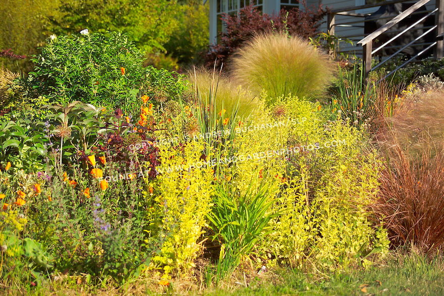 Detail of bed of mixed perennials, shrubs, and grasses, gardened organically, and designed to withstand the areas wet winters and surprisingly warm, dry summer months. Garden design by Stenn Design