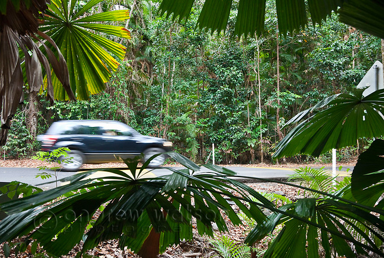 Car driving on rainforest road in Daintree National Park, Queensland, Australia