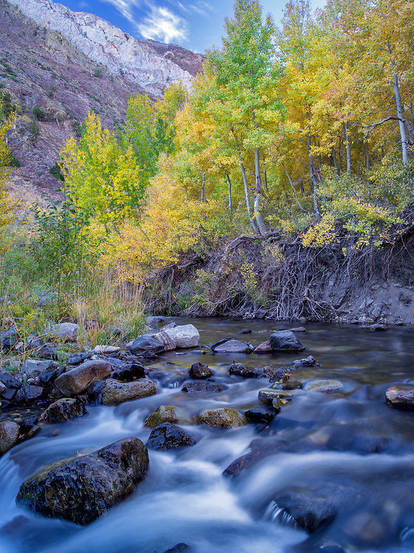 Mcgee Creek and fall colored aspens, Inyo National Forest, Eastern Sierra Nevada mountains, California