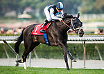 ARCADIA, CA - JANUARY 06: Paved breaks her maiden under Drayden Van Dyke at Santa Anita Park on January 06, 2018 in Arcadia, California. (Photo by Alex Evers/Eclipse Sportswire/Getty Images)