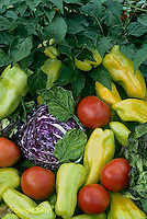 HS52-008b  Variety of harvested vegetables - cabbage, tomato, pepper, lettuce
