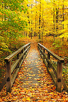 The path across a bridge, symbollic of so many different means, across a little creek at the Morton Arboretum in Lisle, IL