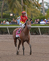 HALLANDALE BEACH, FL - MARCH 31: #8 Audible with John Velazquez returns after winning the Xpressbet Florida Derby GI Stakes.  Scenes from Florida Derby Day at Gulfstream Park on March 31, 2018 in Hallandale Beach, Florida. (Photo by Liz Lamont/Eclipse Sportswire/Getty Images)