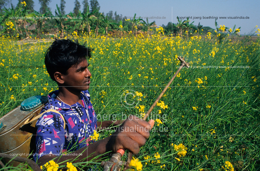 INDIEN Landwirtschaft, Landarbeiter ohne Schutzkleidung und Atemschutz spritzen chemische Pestizide gegen Schaedlinge im Senf Feld / India Westbengal conventional agriculture labourer spray chemical pesticides cocktail in mustard field