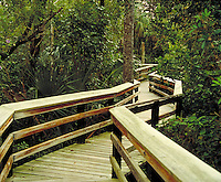 A walkway that carries the visitor through the jungle of Mahogany Hammock in Everglades National Park, Florida. bridge, lush, tropical vegitation. Florida, Everglades National Park.