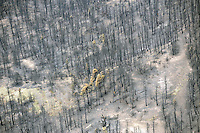 Bear fire of June1, 2011