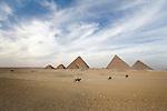 Horses run across the desert sands at the Pyramids of Giza near Cairo, Egypt.