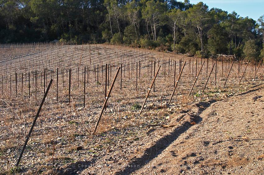 Domaine de Mas de Martin, St Bauzille de Montmel. Gres de Montpellier. Languedoc. In the vineyard. France. Europe.