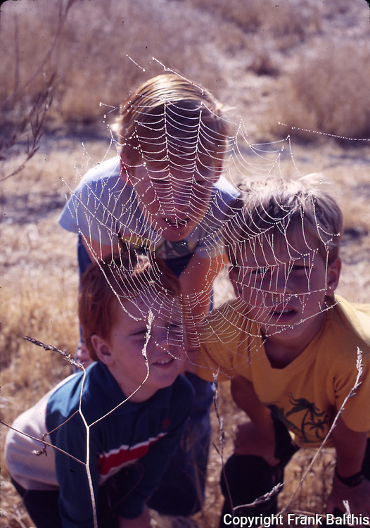 spider web and boys