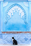A black cat sits in front of a decorated wall painted blue and white