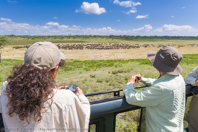 Tourists photograph and watch wildebeest from a  land cruiser in the Serengeti National Park, Tanzania, East Africa
