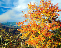Maple and Mount Mirchell, Mount  Mitchell State Park, North Carolina   Blue Ridge Parkway, Highest point E. of Mississippi