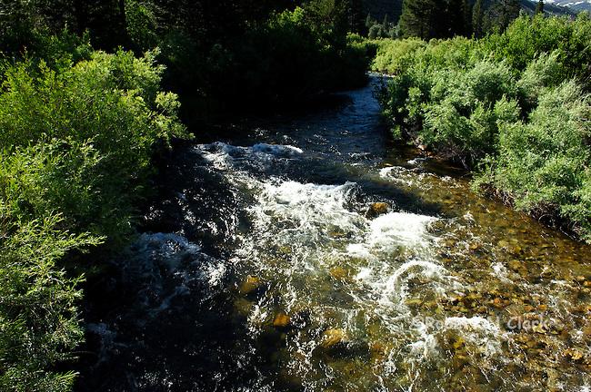 Robinson Creek in the Twin Lakes area near Bridgeport