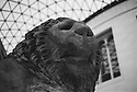 London, UK. 16.01.2016. Lion statue in the British Museum. Photograph © Jane Hobson.