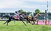 Syntax winning The Kent Stakes (gr 3) at Delaware Park on 7/18/15