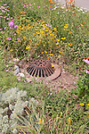 Catch Basin overflow in rain garden