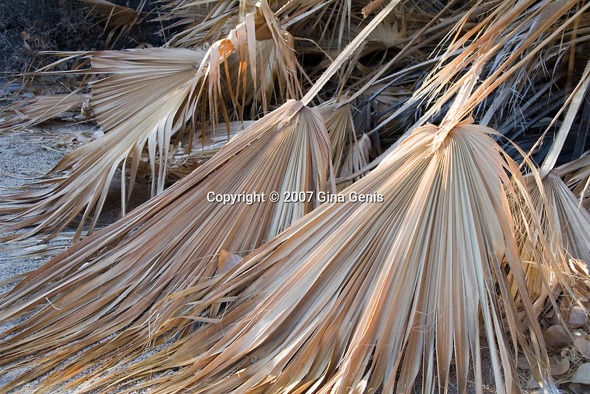 Dry palm leaves in Joshua Tree National Park