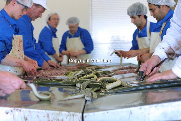 Foto: VidiPhoto..HARDERWIJK - Bij de grootste en modernste ambachtelijke palingrokerij van Europa, K en K Paling en Zalm, wordt een verse lading paling gereed gemaakt voor consumptie. In het nieuwe pand in Harderwijk verwerkt men zo'n 1100 ton paling, voornamelijk afkomstig uit het IJsselmeer, Veluwemeer en de Randmeren, per jaar. Hoewel de palingvangsten weer aantrekken, neemt ook de consumptie van gerookte paling toe. En daardoor blijven de prijzen voor de consument stijgen. Een kilo gerookte IJsselmeerpaling kost nu rond de 70 gulden per kilo.