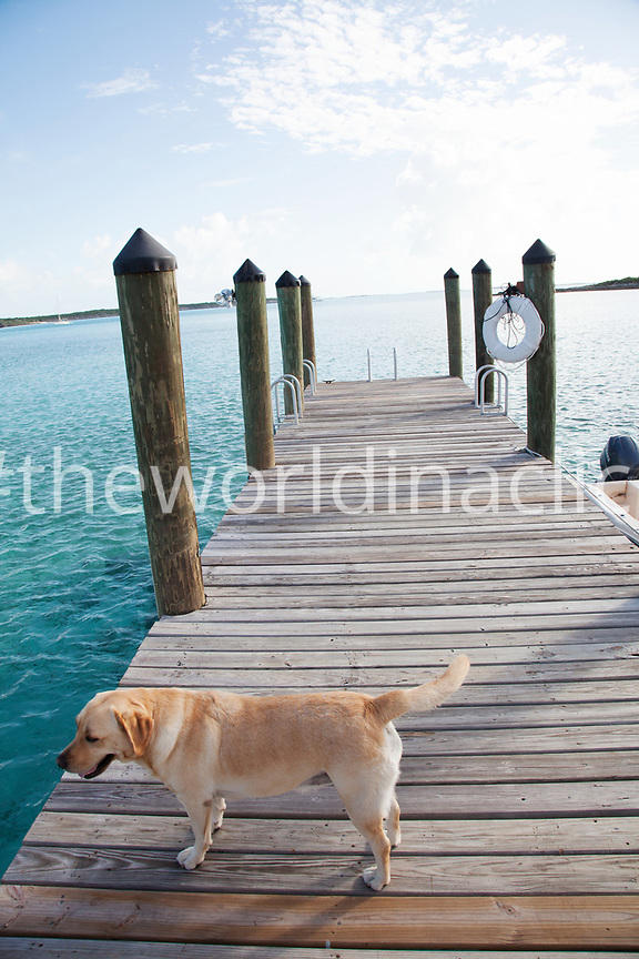 EXUMA, Bahamas. Ruby, the resident dog haning out at the dock of the Fowl Cay Resort.
