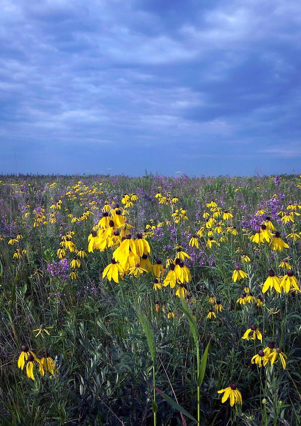 Hayden Prairie State Preserve, Howard County, Iowa